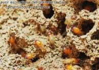 La mayor estructura del planeta la han construido las termitas