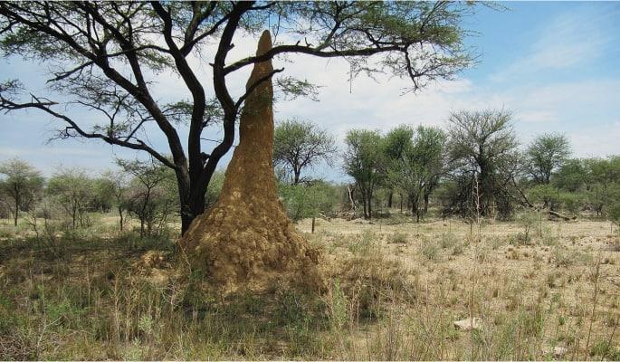 Qué levantaron exactamente las termitas