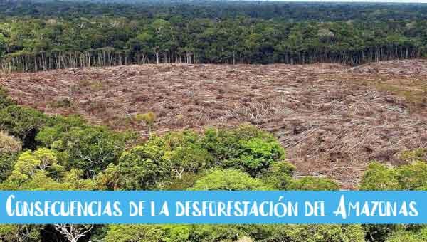 Consecuencias de la desforestación del Amazonas