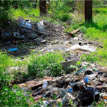 bosque basura